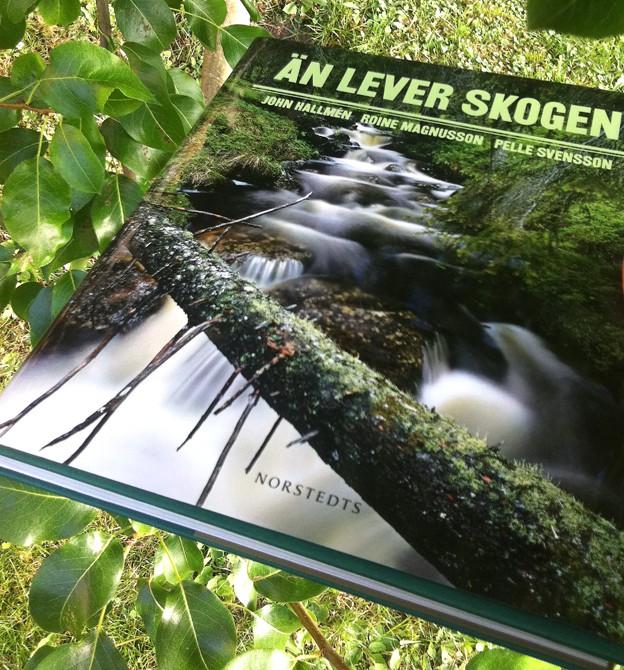 Boken i skogen